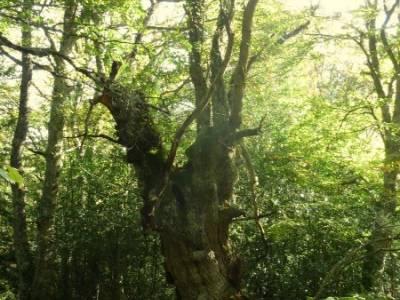 Parque Natural Saja-Besaya y Valderredible (Monte Hijedo) viajes alternativos ruta por carretera gru